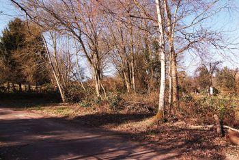 Hamm Bei Saarburg Grosses Naturnahes Baugrundstuck In Ruhiger Lage