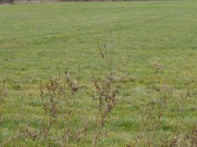 Sonstige Land- und Forstwirtschaft in Garbsen  - Osterwald U. E.