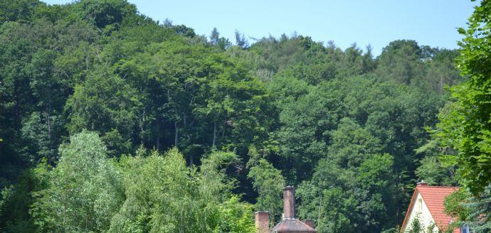 Aussicht von der Dachterrasse gartenseitig