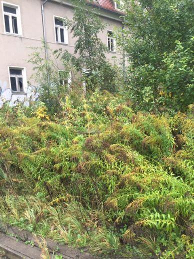 ***Mehrfamilienhaus (Handwerkerobjekt) im Touristenort Bad Schandau!***