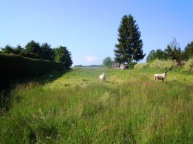 Wohngrundstück in Lengenfeld  - Lengenfeld