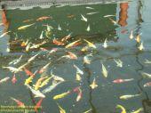 Einmalige Gelegenheit! Fischzucht, Angelfreunde, Freizeitgrundstück