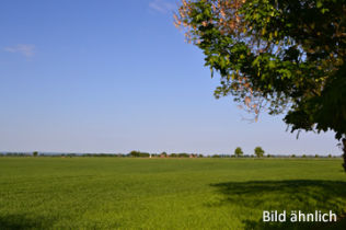 Sonstige Land- und Forstwirtschaft in Haldensleben