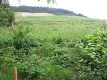 Wohngrundstück in Traben-Trarbach  - Kautenbach