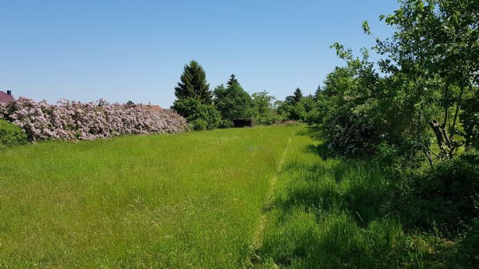 Sonniges Wohnbaulandgrundstück in ruhiger Lage