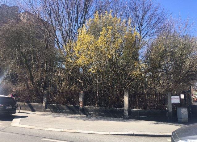Baugrundstück für 2 Mehrfamilienhäuser in Zittau