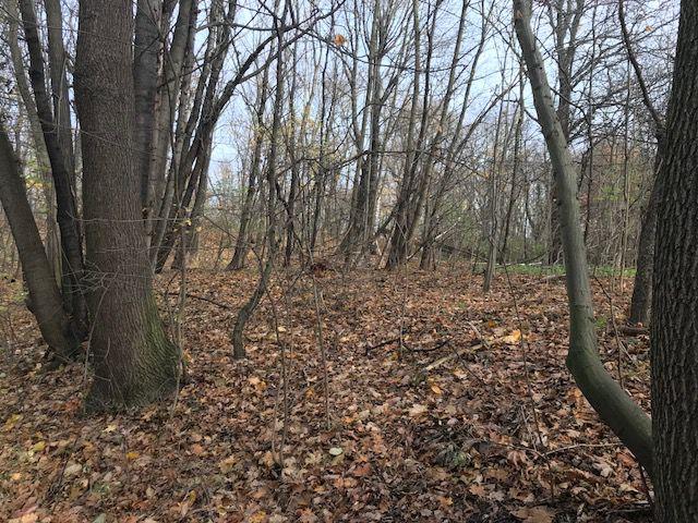 Waldfläche in Dresden