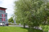 - Vermittelt - Gemütliche Stadtwohnung in zentraler und ruhiger Lage...