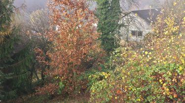 Wohngrundstück in Schönau  - Schönau