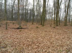 Land- und Forstwirtschaft in Reinstorf  - Wendhausen
