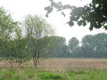 Wohngrundstück in Birkenwerder